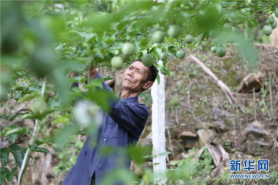 【微纪录・云南故事】边寨纪事:50年前在茅草房结婚,50年后他们