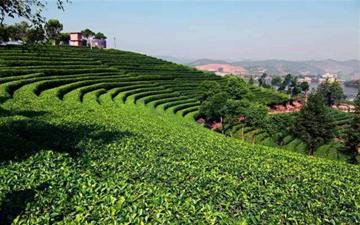 第四届茶文化高峰论坛在京召开