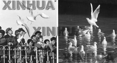11986年11月28日,盘龙江畔。新华社记者朱于湖摄