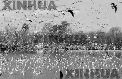 1989年12月26日,翠湖公园。新华社记者陈海宁摄