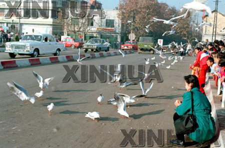 1991年1月17日,市区。 新华社记者闵福全摄