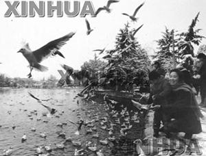 1992年1月13日,翠湖公园。新华社记者陈海宁摄