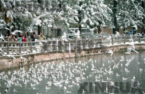 1992年1月13日,翠湖公园。新华社记者闵福全摄