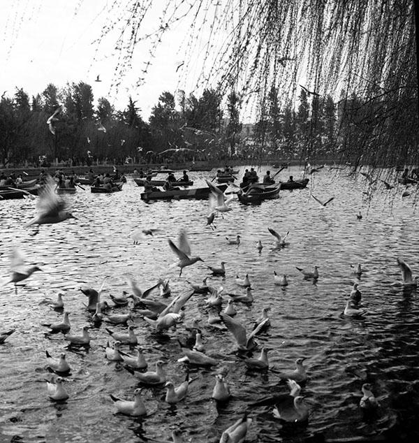 1995年1月,翠湖公园。新华社记者杨宗友摄游客在昆明翠湖公园乘游船观赏红嘴鸥。