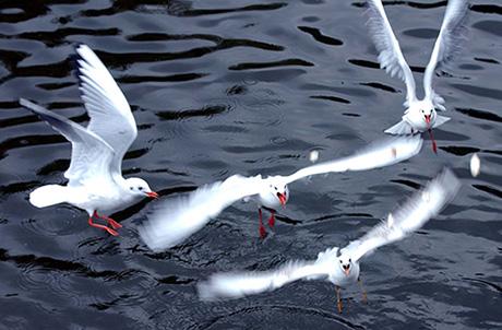 1996年2月3日,翠湖公园。新华社记者杨宗友摄