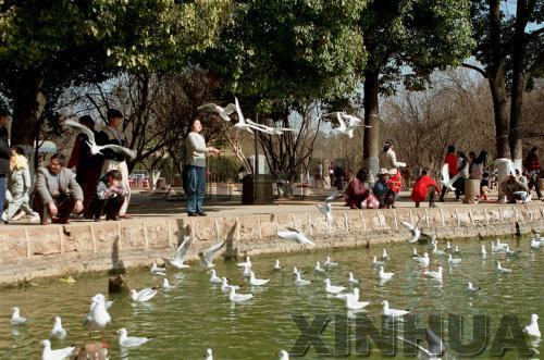 1997年1月15日,翠湖公园。新华社记者王长山摄