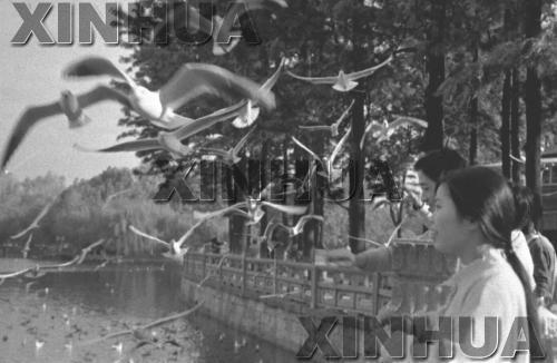 1997年11月24日,翠湖公园。新华社记者谭熙鹏摄