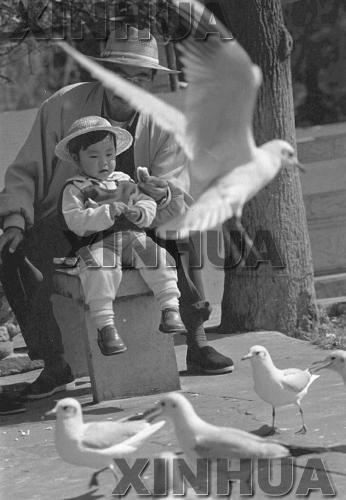 1998年11月30日,翠湖公园。红嘴鸥盘旋在昆明人的头顶,伸手可及,冬日喂食红嘴鸥已成为市民的休闲活动。新华社记者谭熙鹏摄