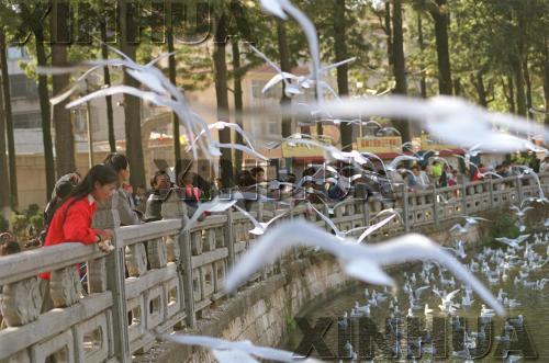 """1999年8月18日,翠湖公园。这种人鸥""""相亲""""的场面随处可见。新华社记者谭熙鹏摄"""