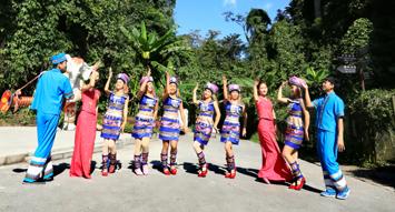 探索雲南熱帶雨林 西雙版納望天樹一日遊
