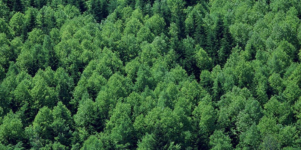 昆明尋甸打通綠色生態扶貧通道