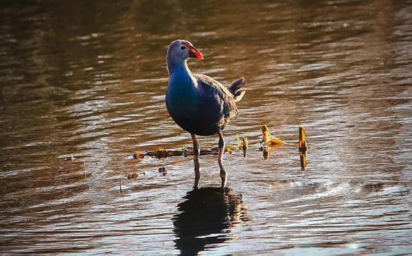 雲南大理:生態與水鳥的美麗遇見