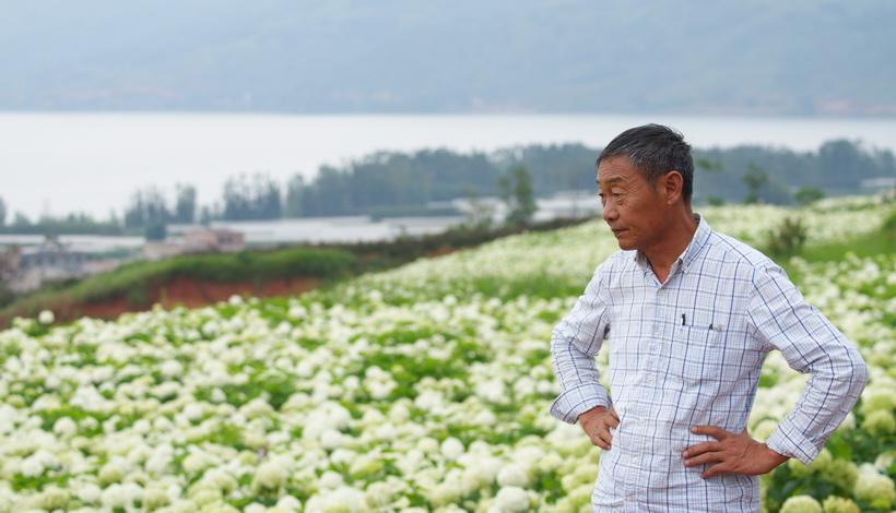 【新華訪談】繡球:煥彩千年夏之花