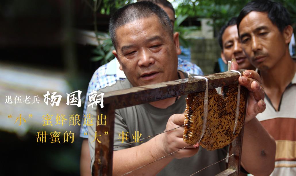 """退伍老兵楊國朝:""""小""""蜜蜂釀造出甜蜜的""""大""""事業"""
