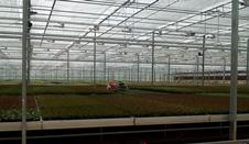 雲南省花卉所:圍繞産業需求 加快科技成果轉化