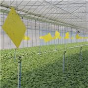 雲南硯山調整種植結構推進高原特色農業轉型升級