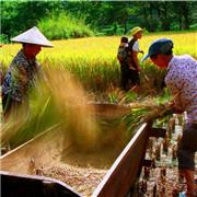 雲南廣南:企業、農戶合力拔窮根