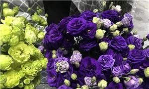 """一大批鮮花""""突襲""""春城 來第十九屆中國昆明國際花卉展赴一場芬芳之約"""