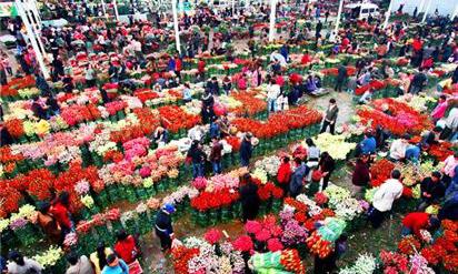 奉獻全球人均一枝花——雲南鮮花走向世界