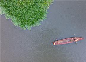 """湖濱濕地:滇池的""""美麗屏障"""""""