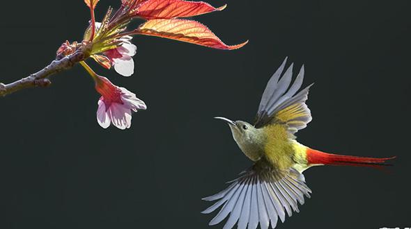 2019年高黎貢山國際觀鳥周活動在雲南保山舉行
