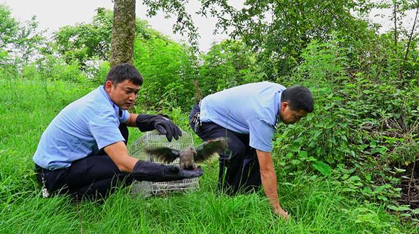 騰衝森林公安助40余只野生鳥重返家園