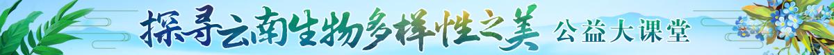"""""""探尋雲南生物多樣性之美""""公益大課堂"""