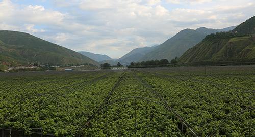 昆明東川:小江流域展新貌 綠色發展顯活力