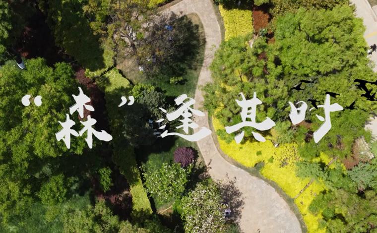 """【COP15全球短視頻徵集作品展示】""""森""""逢其時"""