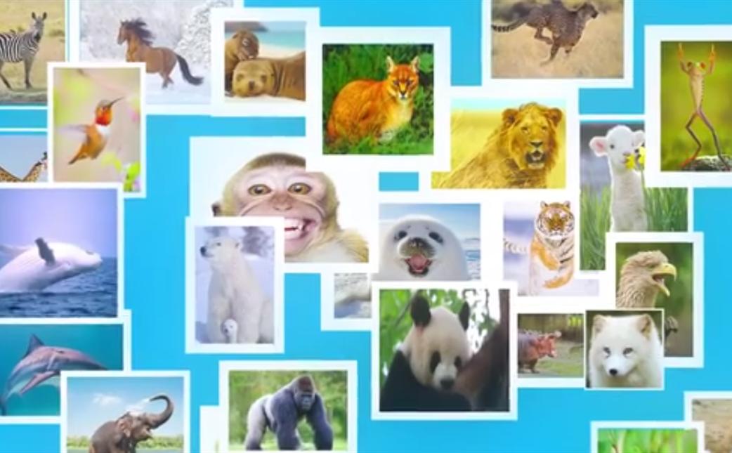 【COP15全球短視頻徵集作品展示】守護多樣世界 共建地球家園