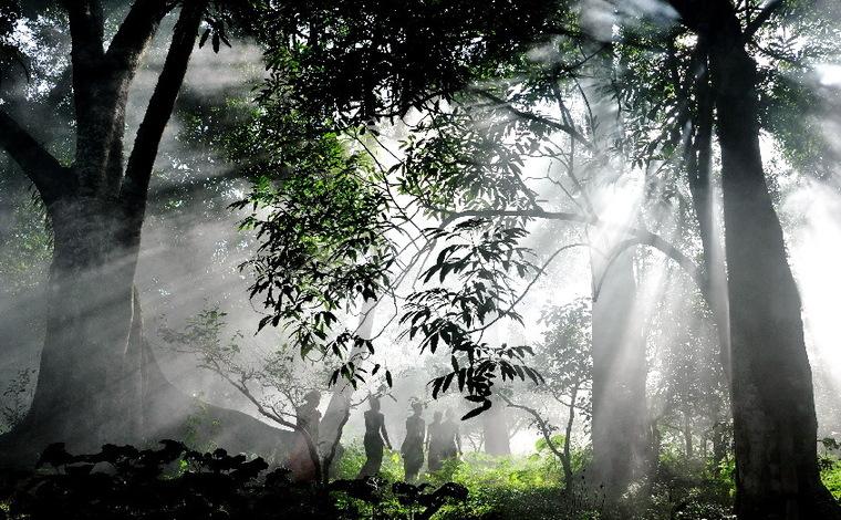 【COP15短視頻裏看世界】——探秘植物家園 擁抱美麗自然