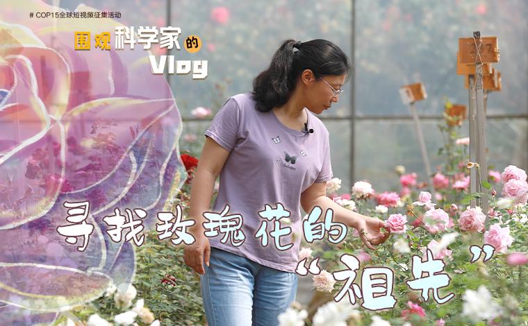 """【圍觀科學家的Vlog】尋找玫瑰花的""""祖先"""""""