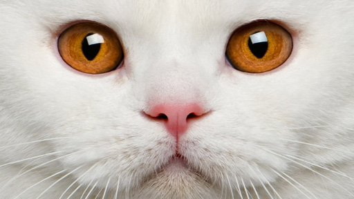 猫脸黑白设计手绘