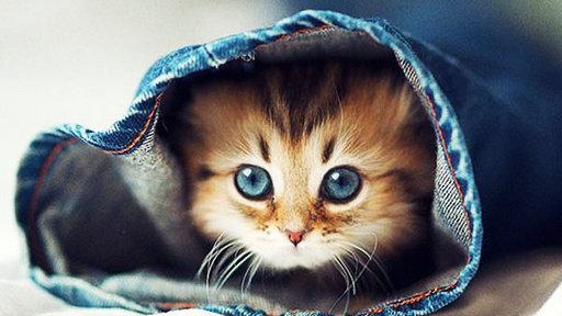 """澳宠物猫爆红网络 被誉""""最可爱猫咪"""""""
