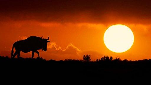 非洲草原野生动物剪影摄影作品