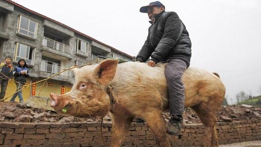 中国活过一千年的动物