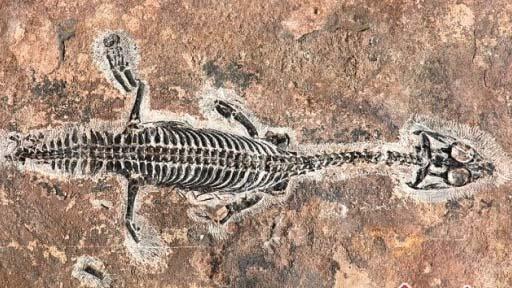 触摸亿万年前的生命