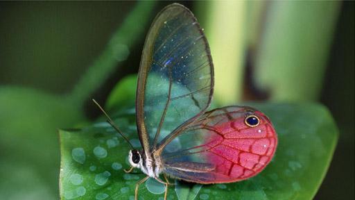 摄影师拍摄透明动物神奇影像