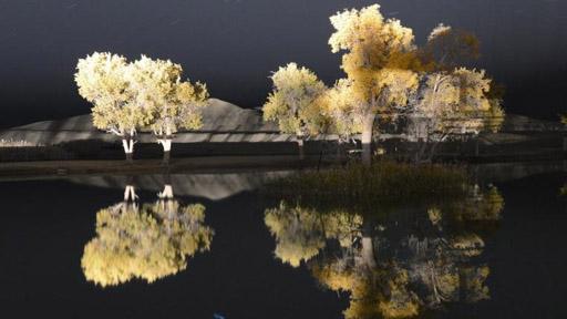 新疆塔里木盆地沙漠胡杨秋色斑斓美景诱人