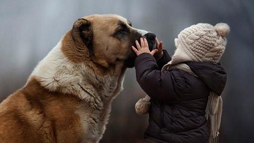 动物抱图片大全图片