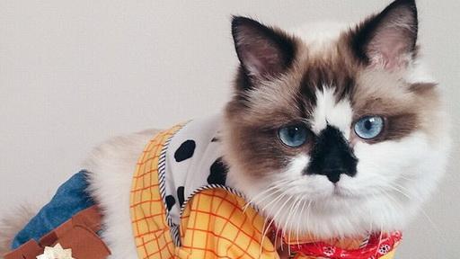 美国明星猫咪扮电影角色网上窜红 拥有6万粉丝