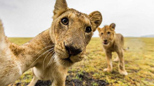 澳夫妇非洲探险为野生动物拍写真