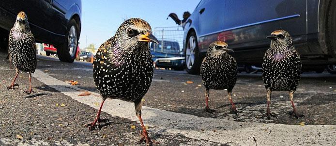 英年度野生动物摄影大赛获奖作品揭晓