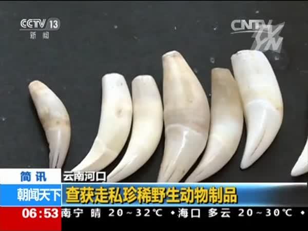 牙等珍稀野生动物制品