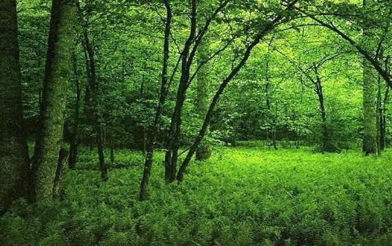 孟加拉老漢48年來每天種樹:沒種睡不著