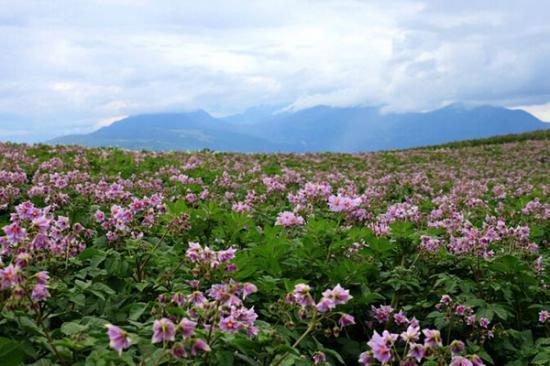 雲南省農業農村經濟總體運行平穩
