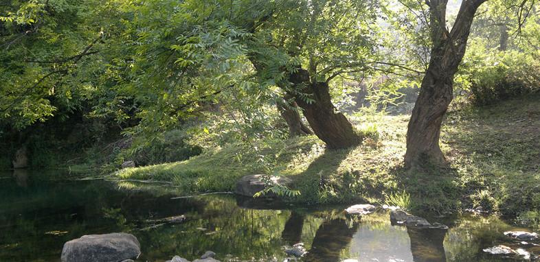 《黃昏老樹2》