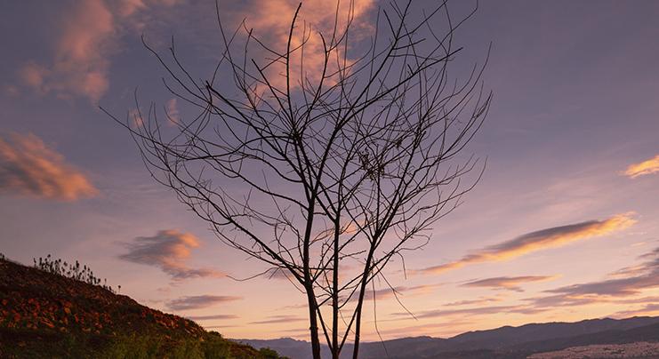 《枯樹也開花》