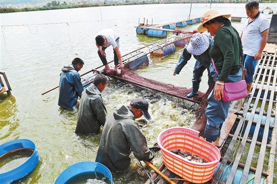 彌渡縣淡水漁業産值逾2億元