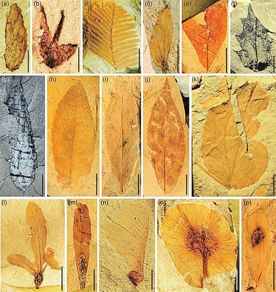 雲南現代植被起源可向前追溯至3300萬年